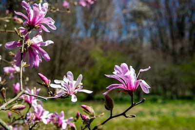 Brinka Cross Springtime