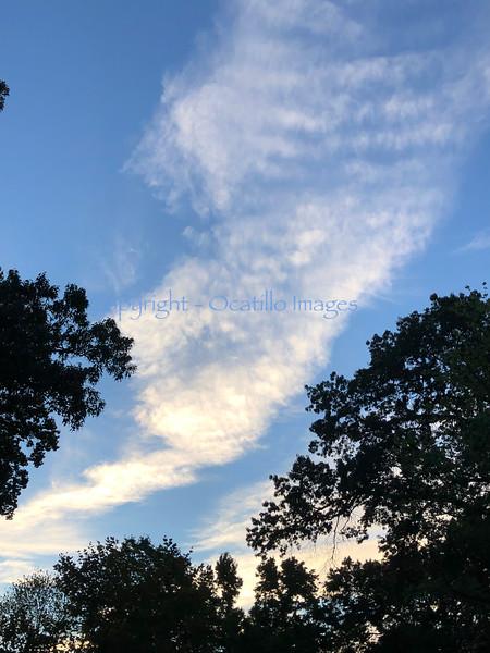 Sky Trace.jpg