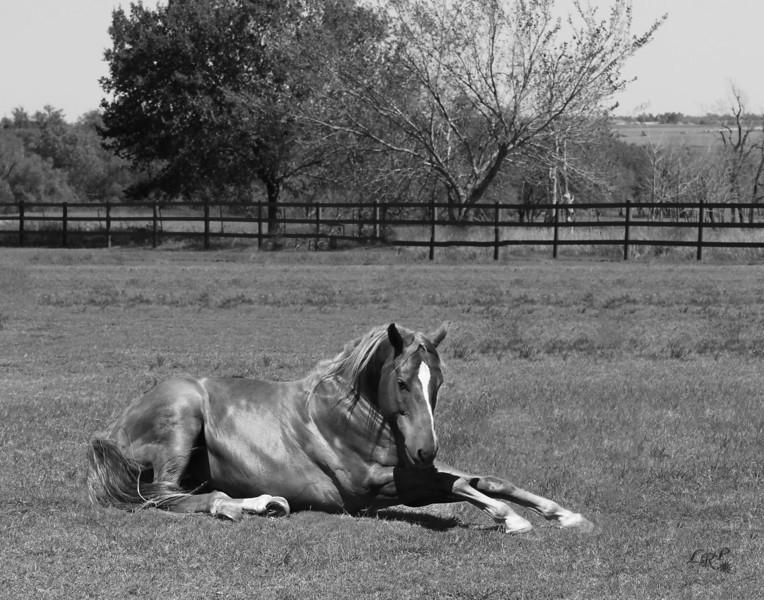 laying horse-B&W222.jpg
