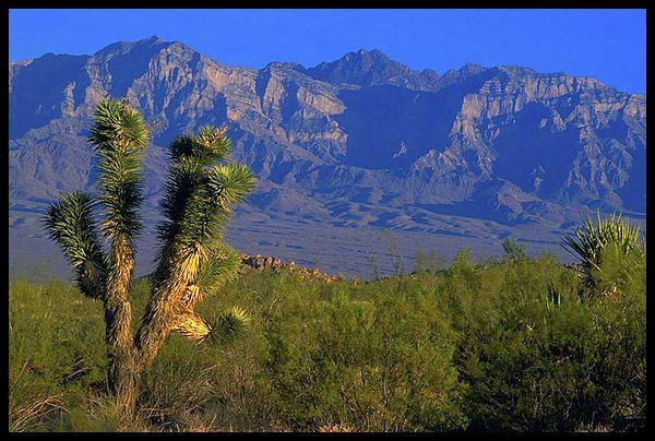 Desertscape2.jpg
