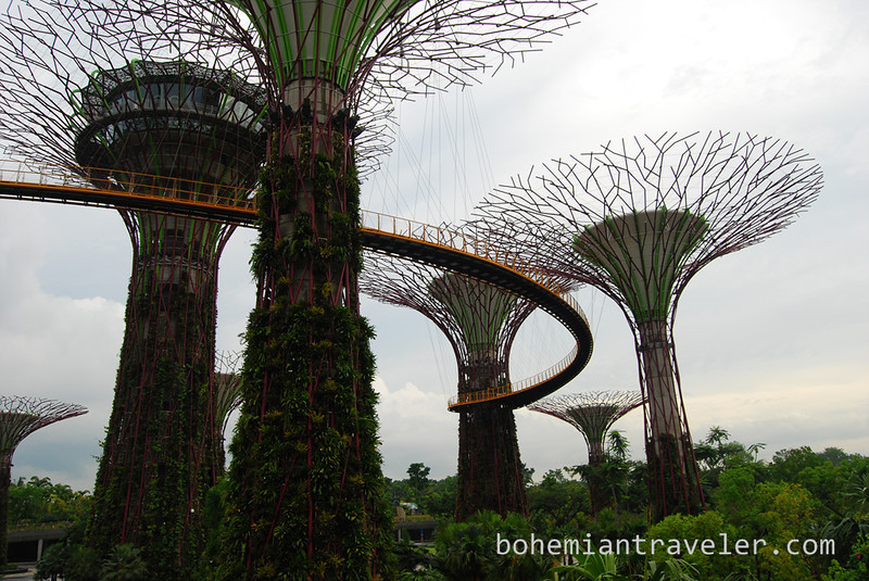 Super Trees at Gardens by the Bay (2).jpg
