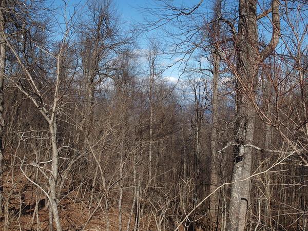 January 2015 Landscapes