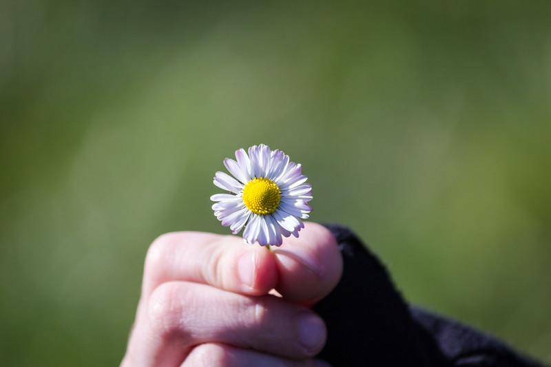 kieran flower.jpg