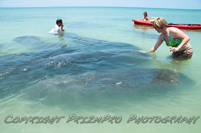 Indian Rocks Beach Manatees
