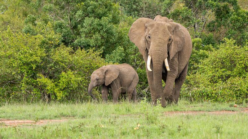 Elephants-0215.jpg