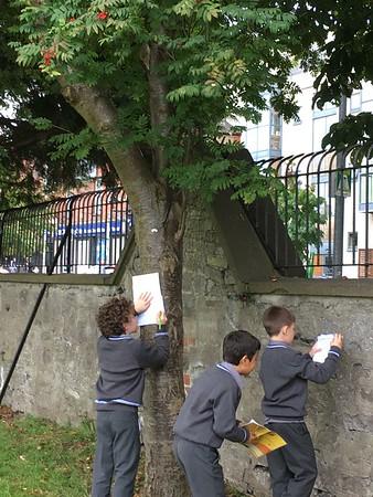 Tree Survey on Front Field