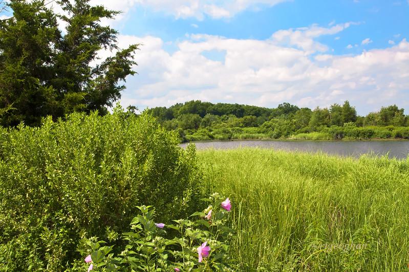 July 22_Mill Creek Marsh_0906.jpg
