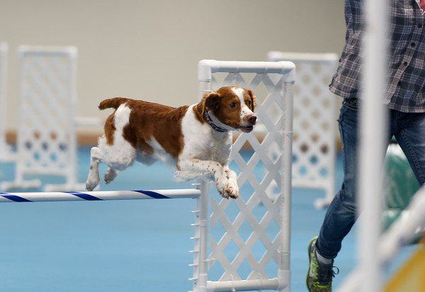 Agility Trial Sat. Nov 16 2019