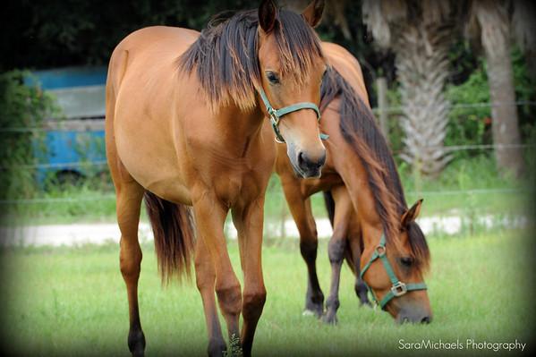 Bonita's Horses