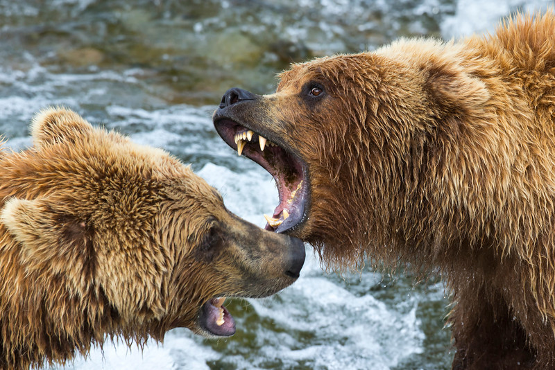 Alaska_2013_FH0T9514.jpg