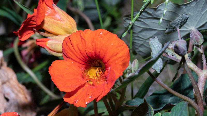 orange8-9764.jpg