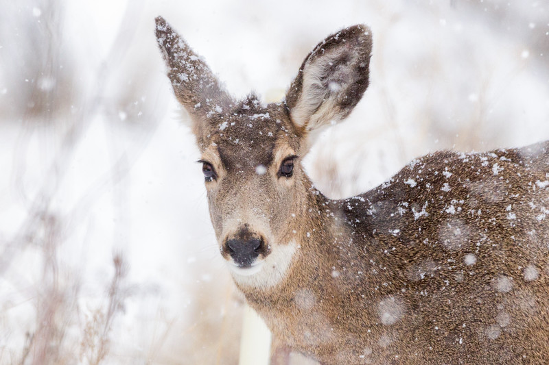 Day 18: Deer in the snow