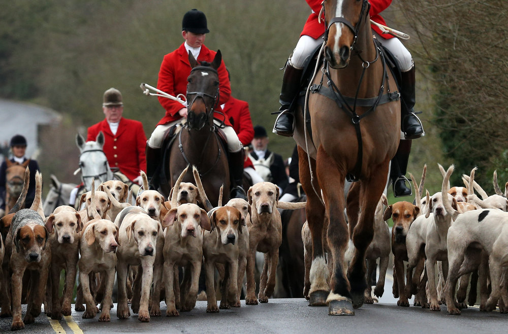 Description of . Riders and hounds from the Avon Vale Hunt arrive for their traditional Boxing Day hunt, on December 26, 2012 in Lacock, England. As hundreds of hunts met today, Environment Secretary Owen Paterson claimed that moves to repeal the ban on hunting with dogs in England and Wales may not happen in 2013, although he insisted it was still the government's intention to give MPs a free vote on lifting the ban.  (Photo by Matt Cardy/Getty Images)
