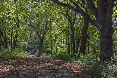 Hiking at Hickory Grove Lake
