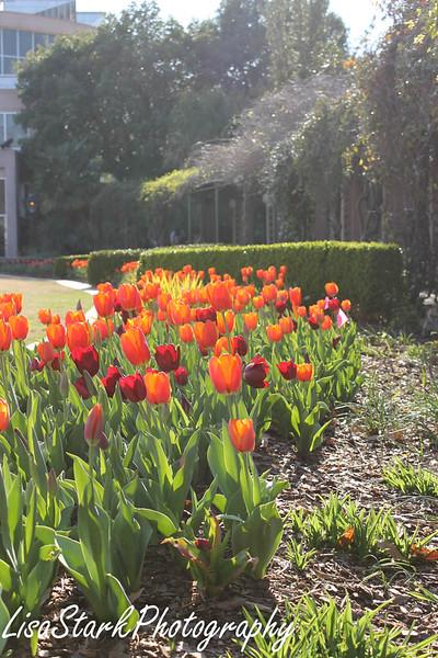 Atlanta Botanical Garden-9.jpg