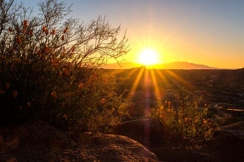 Arizona '19
