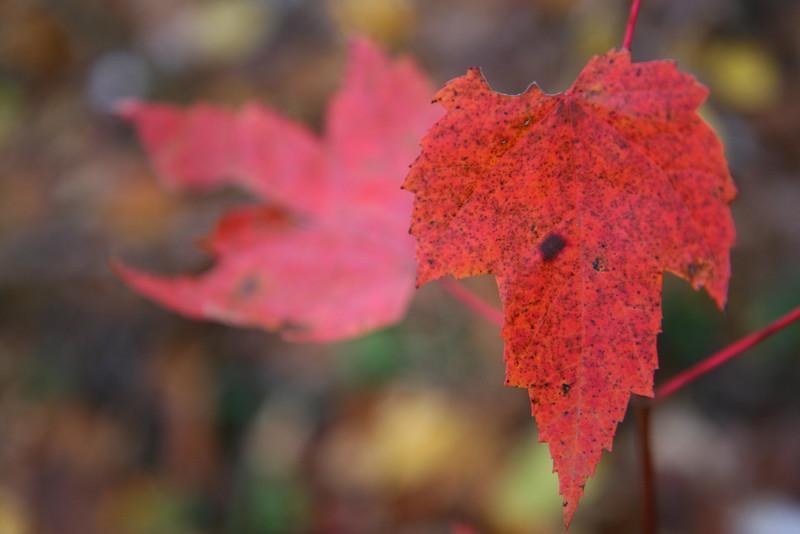 Life Outside-Fall
