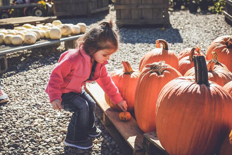 pumpkin picking 10-2016 _IMG_0887.jpg