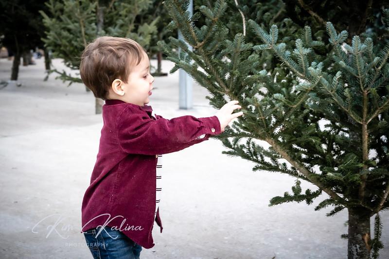Owen Tree-00313.jpg