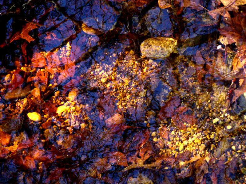 Leaf Reflection