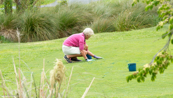 Voluneer Sue Velvin working to prepare the Royal Wellington Golf Club  to host the Asia-Pacific Amateur Championship tournament 2017 held in Heretaunga, Upper Hutt, New Zealand from 26 - 29 October 2017. Copyright John Mathews 2017.   www.megasportmedia.co.nz