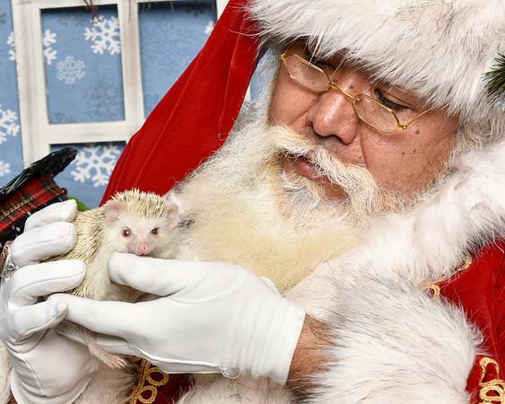 Petland Holiday Pet photo and Fundraiser