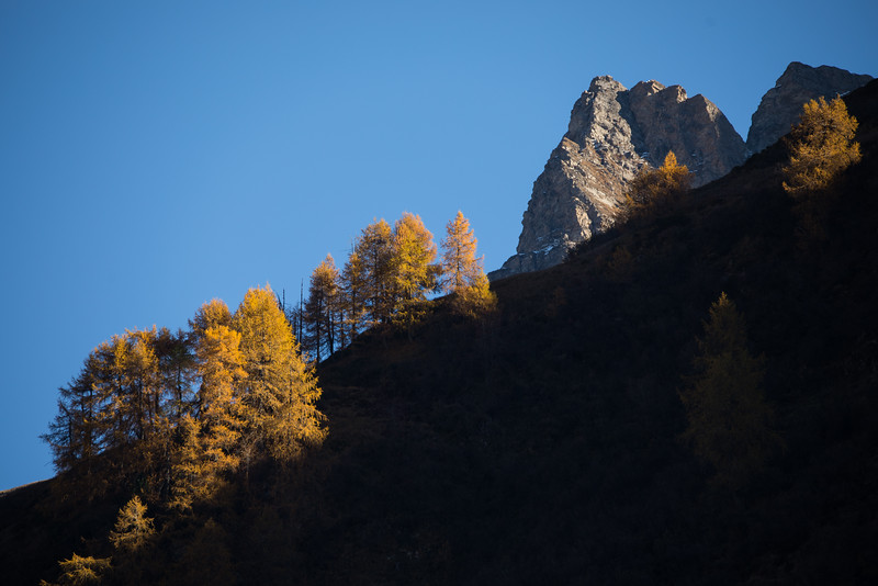 Herbst-im-Rheinwald--27.jpg