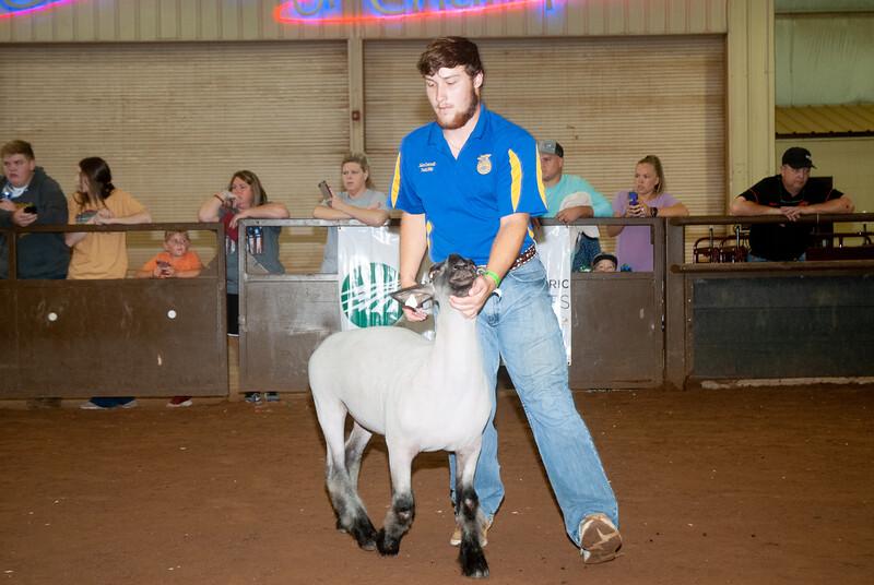 ok_state_fair_20190914_lambs-24.jpg