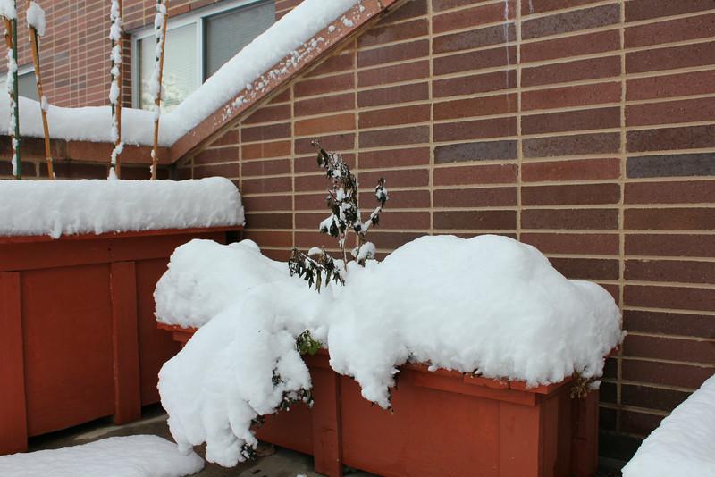 Snowy_Morning_11_10_2012_3303.JPG