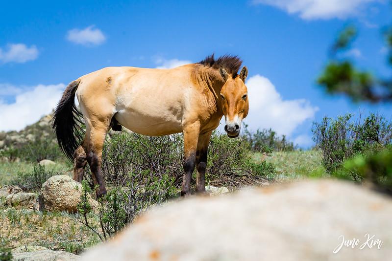 Kustei National Park__6109517-Juno Kim.jpg