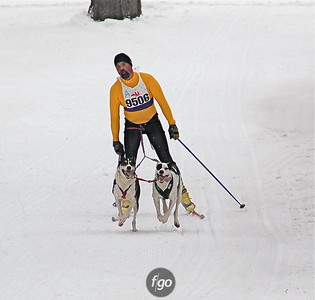 2008 City of Lakes loppet - Skijoring
