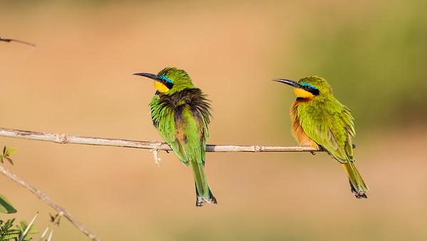 2 Samburu
