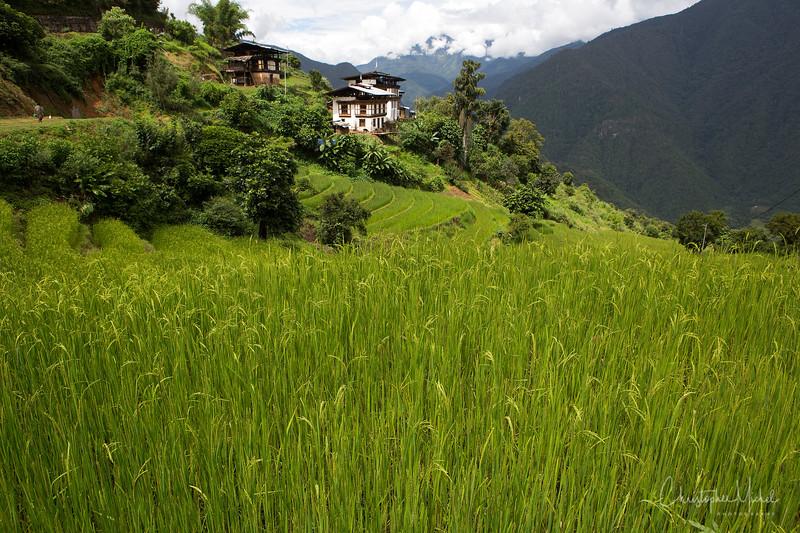 punakha-dzong_chorten-nebu_20120917_8818.jpg