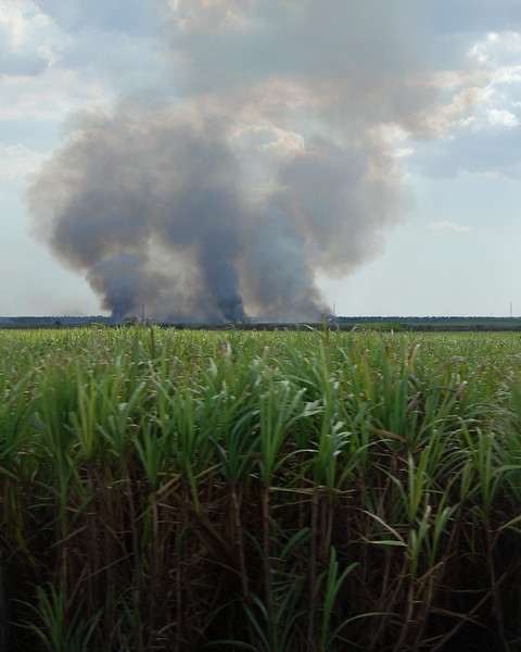Burning canefields - Lou Tucciarone
