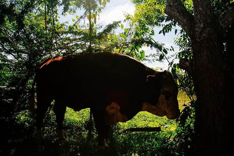 Belize Accommodations 10.jpg