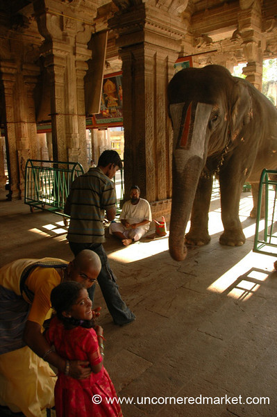 Waiting for the Elephant: Trichy, India