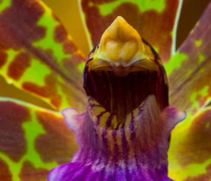 orchidmanDRM8214.jpg