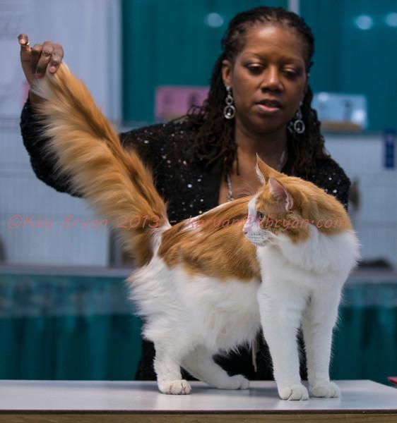 CatShow2014052_1.jpg