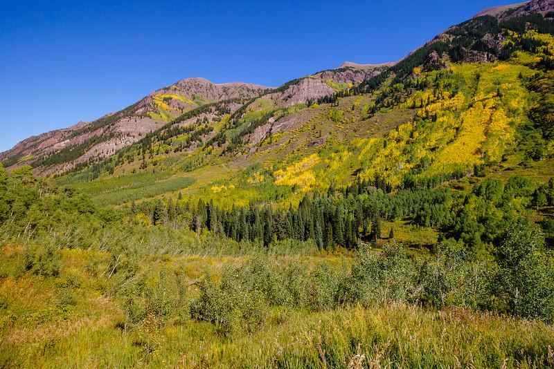 Aspen trees, Maroon Bells-Snowmass Wilderness