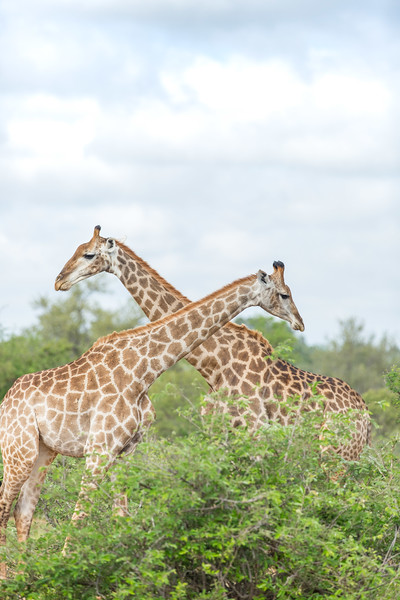 SouthAfricaHoneymoon-884.jpg