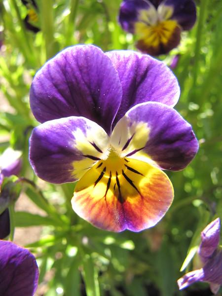 amh FLOWERS (1058).jpg