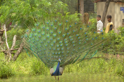 Nehru Zoological Park - Hyderabad Zoo - Part 7