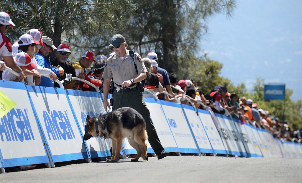 . Califorina State Parks officer Rob Chambers and his dog, Argo, perform a security sweep prior to riders approaching the finish line during Stage 7 of the Amgen Tour of California at the summit of Mt. Diablo at Mount Diablo State Park in Contra Costa County, California, on Saturday, May, 19, 2013. (Dan Honda/Contra Costa Times/MCT)