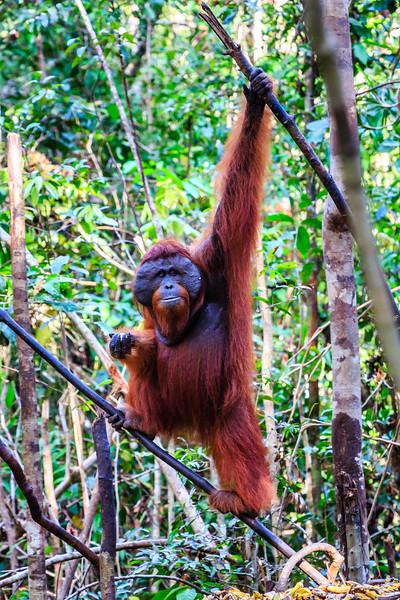 Kalimantan (Borneo) Dag 3-4 en 5