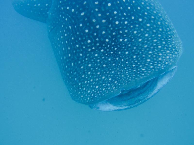 Maldives 2012-511.jpg