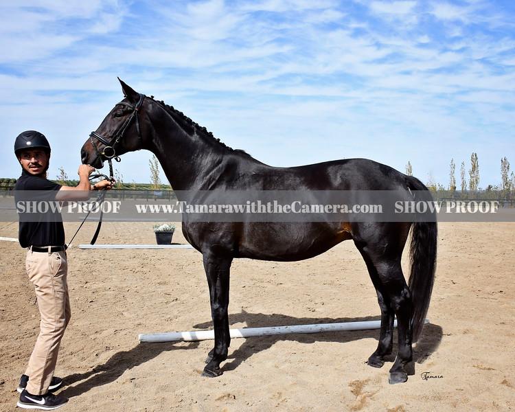 OldNA 19 Shyriana 1113.jpg
