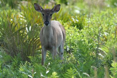 Split Oak Mitigation Forest WMA 4/28/09