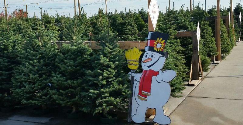 Christmas Trees at GANS.png