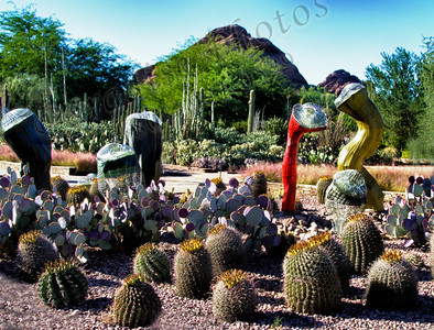 Desert Botanical Gardens AZ 1112