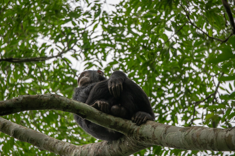 Uganda_T_Chimps-1028.jpg